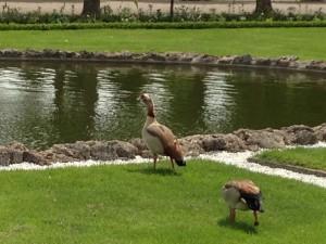 Der Eintritt war für mich frei und gleich zu Beginn liefen usn diese hübschen Enten über den Weg