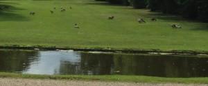 eine Wiese voller Enten