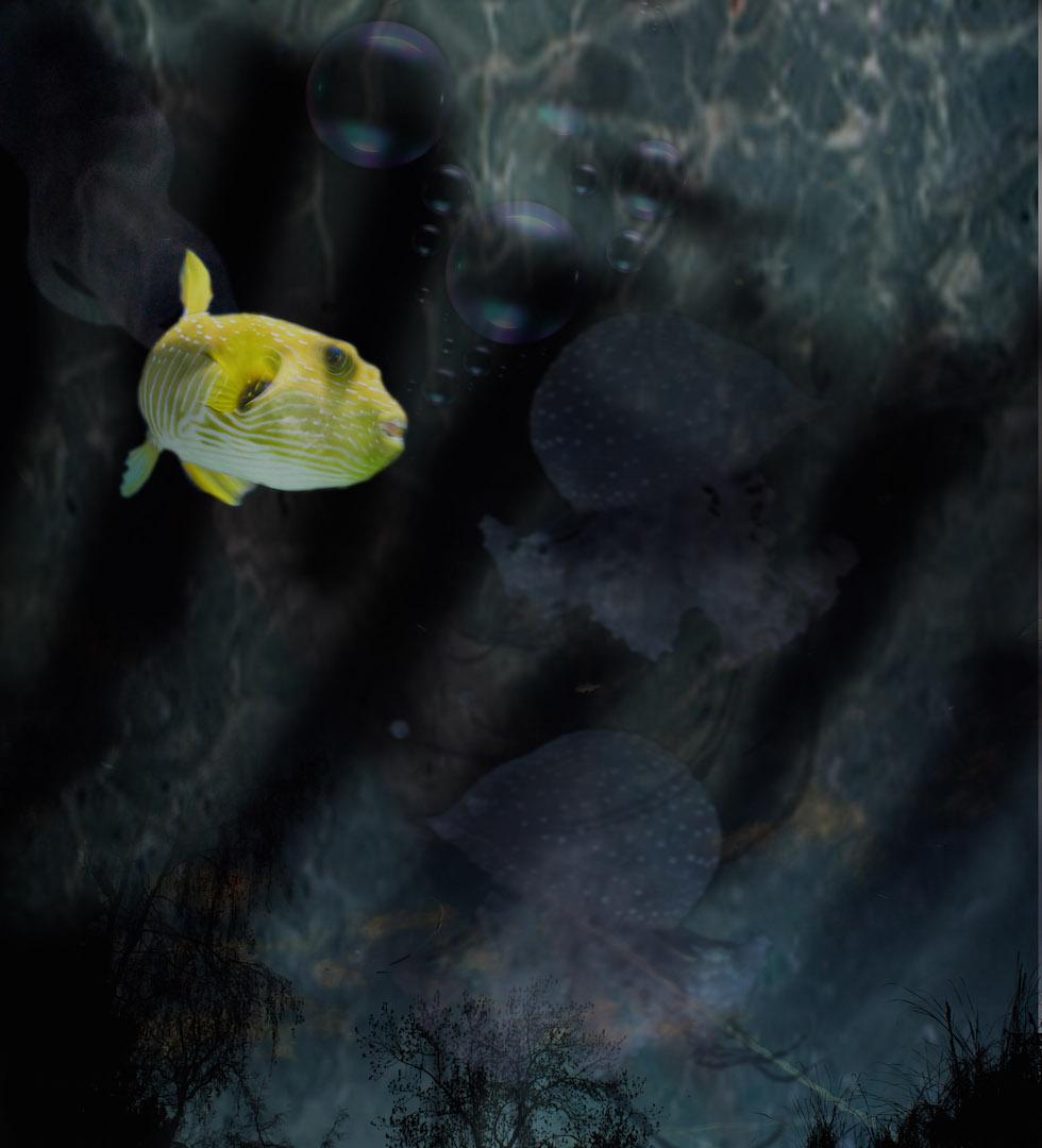 unterwasser-Chamailion