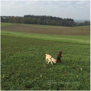 Hund_und_frische-Luft