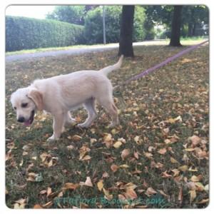 Leben-mit-Hund_aufregend