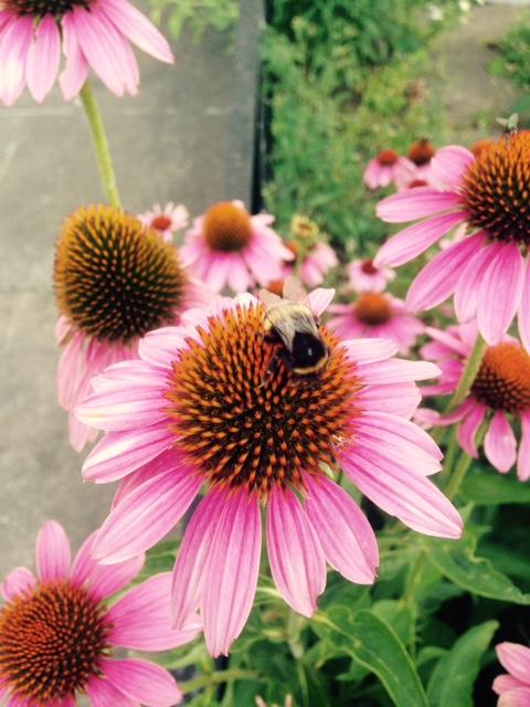 Sex_Blumen-und-Bienen Elternsex