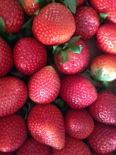 Montag_Erdbeerliebe