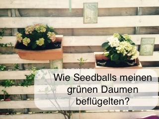 Seedballs_gruener-Daumen