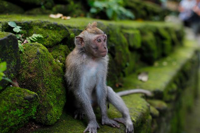 Montagspost_Reisen-um-die-Welt-Affe