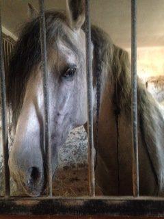 Pferd_Zoepfe_Apulien