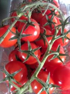 Tomatenliebe_12v12_Juli