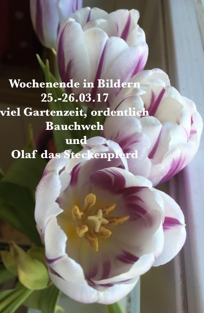 WiB-25-26.03.17-Steckenpferd-Garten-Bauchweh