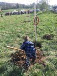 Lebensbaum-einpflanzen
