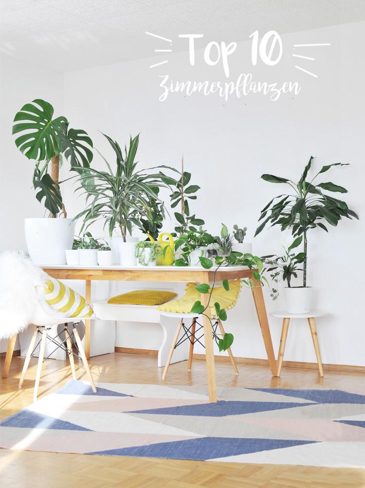 die-besten-pflanzen-fuer-die-wohnung-top-10