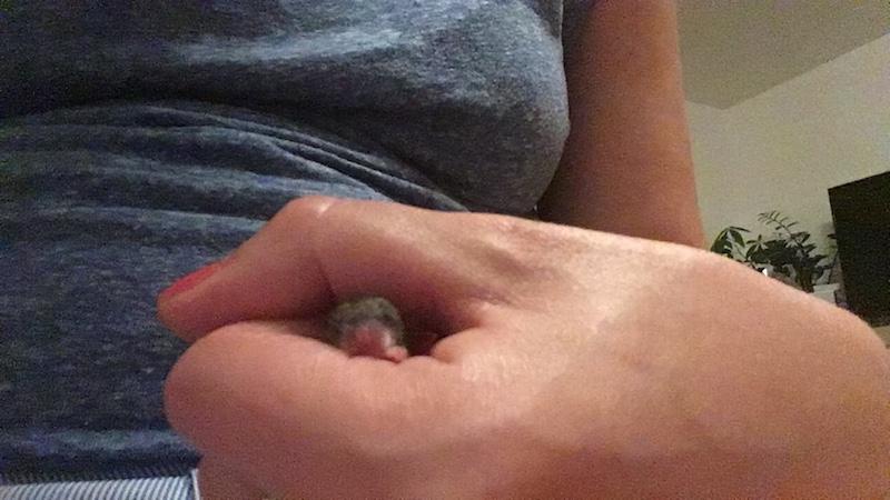 Babymaus-kuscheln